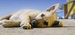 frasi per i cani