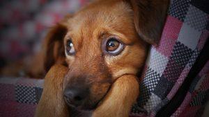 frasi per cani