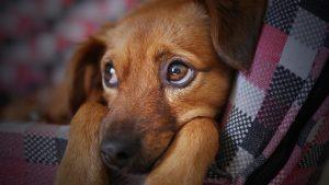 frasi sguardo cane
